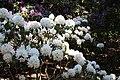 Rhododendronpark Bremen 20090513 127.JPG