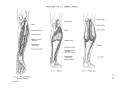 Richer - Anatomie artistique, 2 p. 73.png
