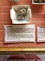 Rillieux-la-Pape - Musée Testut-Latarjet, arsenic natif.jpg