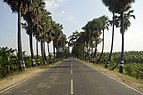 Road with Palmyra palm trees 1 JEG6337.jpg