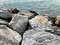 Rocks at the seashore of Marbella.jpg