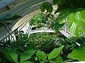Roofclimbing plants Kew Gardens.jpg