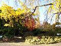 Royal Gardens at Kew (5341277327).jpg