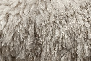 Wool natural fibre from the soft hair of sheep or other mammals