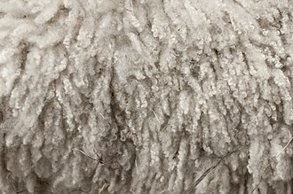 Wool - Wool just before processing