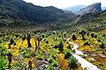 Rwenzori Mountains.jpg