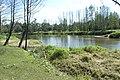 Rzeka Liwiec - panoramio (2).jpg