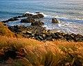 SEAOATS CA8.jpg