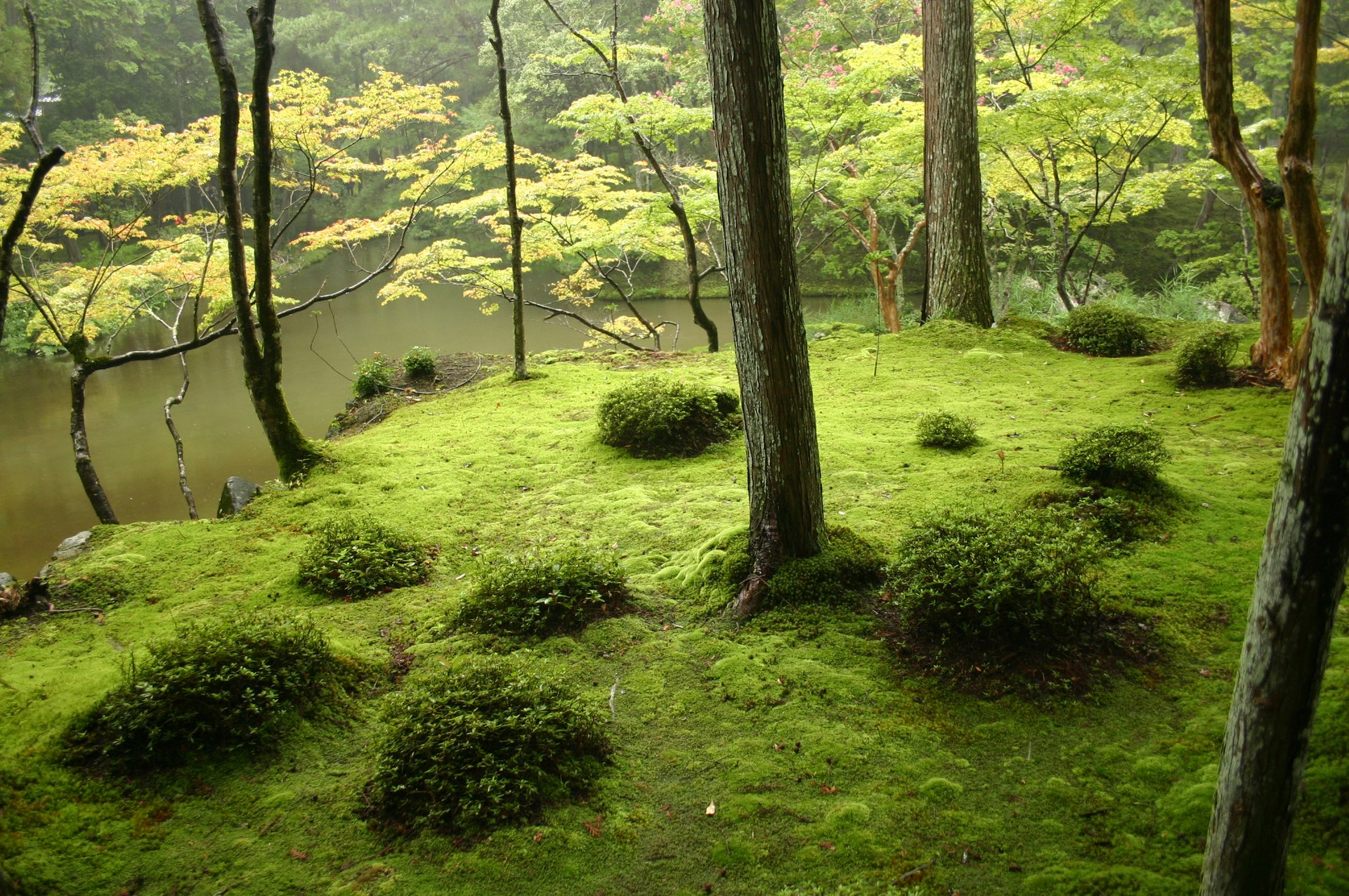 jardin japonais wikip dia