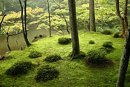 http://upload.wikimedia.org/wikipedia/commons/thumb/8/88/Saihouji-kokedera01.jpg/260px-Saihouji-kokedera01.jpg