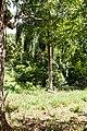 Samaná Province, Dominican Republic - panoramio (68).jpg