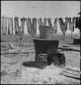 San Lorenxo, California. Washday 48 hours before evacuation of persons of Japanese ancestry from th . . . - NARA - 537543.tif