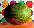 Santa Claus Melon.jpg