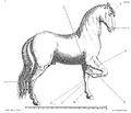 Saunier - La Parfaite Connaissance des chevaux 197.png