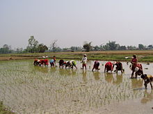 importance of agriculture in nepal essay