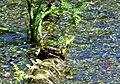Sausee-seckbach021.jpg