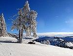 Schauinsland Wintersonnentag.jpg