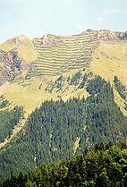Schutzwald-Lawinenverbauung.jpg