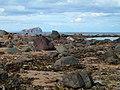 Scoughall Rocks - geograph.org.uk - 1115312.jpg