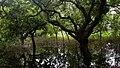 Seasonal Swamp Forest ,National Botanical Garden of Bangladesh pic 4.jpg