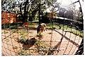 Sekretär Zoologischer Garten Berlin - Wildlife ^ Zoo Photography - panoramio.jpg