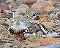 Seney National Wildlife Refuge - Youth (9705258520).jpg