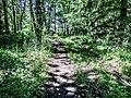 Sentier côté nord de l'habitat fortifié du Grammont.jpg