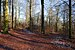 Sharp intersection of multiple trails in Parc Naturel de Gaume, Florenville (DSCF7245).jpg