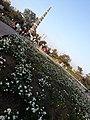 Shaurya Smarak Bhopal - 8.jpg