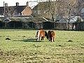 Shetland Ponies Topcliffe - geograph.org.uk - 324844.jpg