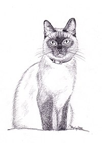 Siamese cat, pencil drawing.jpg