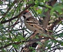 List of birds of Pakistan - Wikipedia