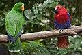 Singapore Zoo Aussie Birds-2 (6593455303).jpg