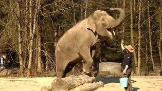 File:Slon v ZOO Ljubljana.ogv