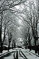 Snow (2354207571).jpg