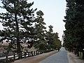 Soka Matsubara.jpg