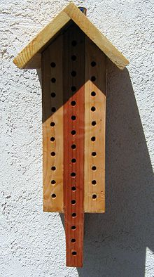 220px-Solitary_bee_house.jpg