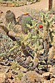 Sonora Desert Museum, Tuscon Arizona - panoramio.jpg