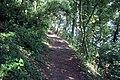 South West Coast Path near Culver Cliff - geograph.org.uk - 943447.jpg