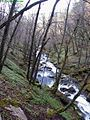 Spring-Hills-Creek ForestWander.JPG