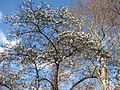Spring in St. James Park - London (2329821046).jpg
