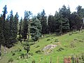 Srinagar - Pahalgam views 51.JPG