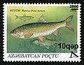 Stamps of Azerbaijan, 2006-732.jpg