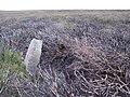 Standing Stone, High Moor - geograph.org.uk - 40045.jpg