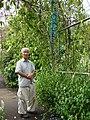 Starr-090430-6827-Strongylodon macrobotrys-flowering habit with Kazuo Takeda-Enchanting Floral Gardens of Kula-Maui (24860084521).jpg