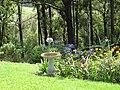 Starr-170513-8627-Agapanthus praecox subsp orientalis-flowering habit with cosmos and bird bath-Hawea Pl Olinda-Maui (35098414611).jpg