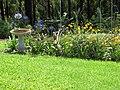 Starr-170513-8628-Agapanthus praecox subsp orientalis-flowering habit with cosmos and bird bath-Hawea Pl Olinda-Maui (35062484832).jpg
