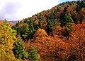 Steni forest-Δάσος Στενής.jpg