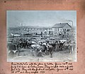Stockyards (1895).jpg