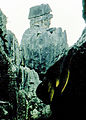 Stone forest 1983-23.jpg